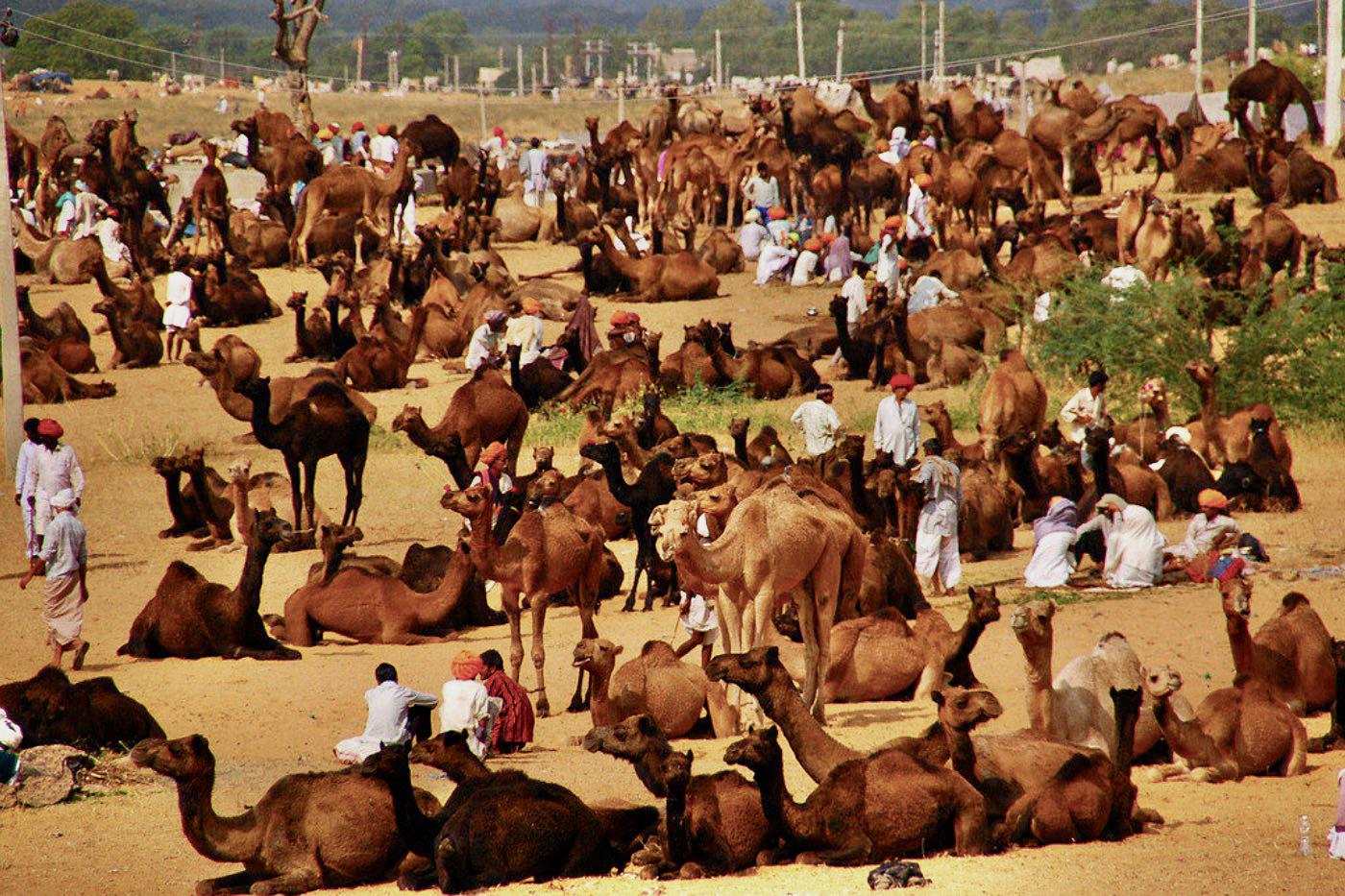 pushkar_fair__rajasthan_ india